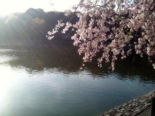 2011_kashihara_04