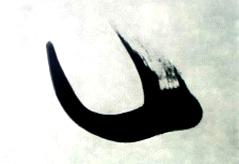 Hane01